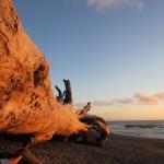 Riesiger Mammutbaum am Rialto Beach