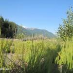 Flussbett mit Blick auf Mount Rainier N.P.