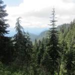 Viel Wald im Mount Rainier Nationalpark